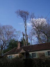 best tree surgeon