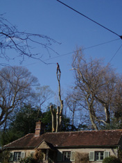 tree surgeon eastbourne
