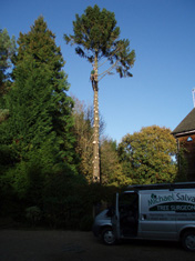 michael salvage tree surgeon