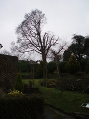 tree surgeon east sussex